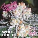 White Fire OG (Growers Choice) Feminizada