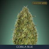 Gorilla Blue (Advanced Seeds) feminizada