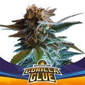 Gorilla Glue Auto (BSF Seeds) feminizada