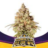 Gorilla Glue 4 (BSF Seeds) feminizada