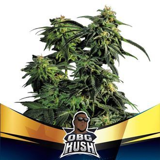 OBG Kush (BSF Seeds) feminizada