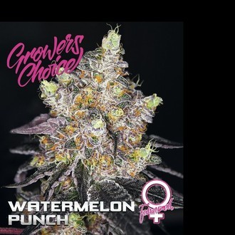 Watermelon Punch (Growers Choice) feminizada