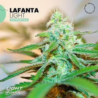 Lafanta Light Auto (Light Buds) feminizada