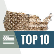 Top 10 Semillas De Marihuana de USA