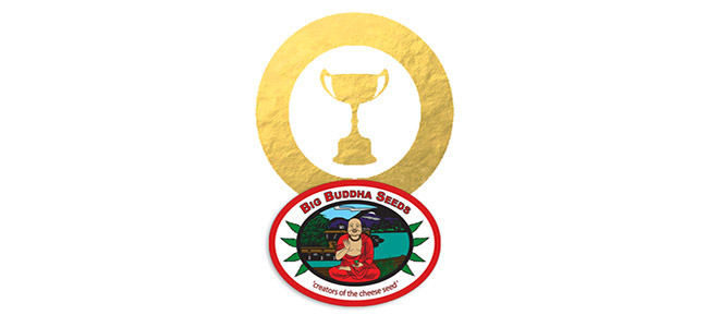 Premios Big Buddha Seeds