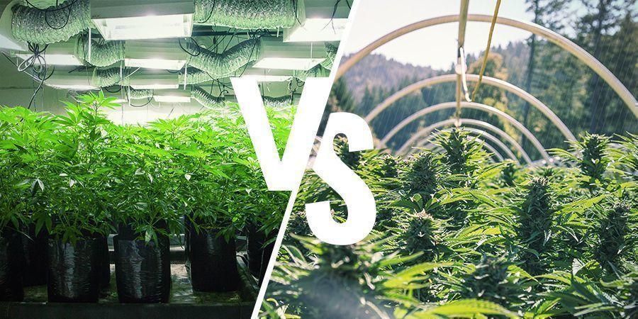 ¿En Qué Se Diferencian El Cultivo Interior Y El Cultivo Exterior?