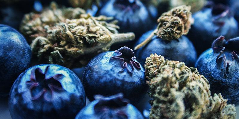 Blueberry: Sabor Y Efectos