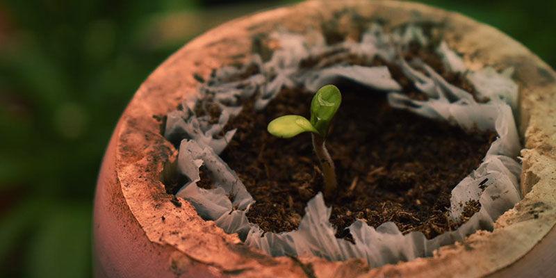 Cómo Se Cultiva La Blueberry