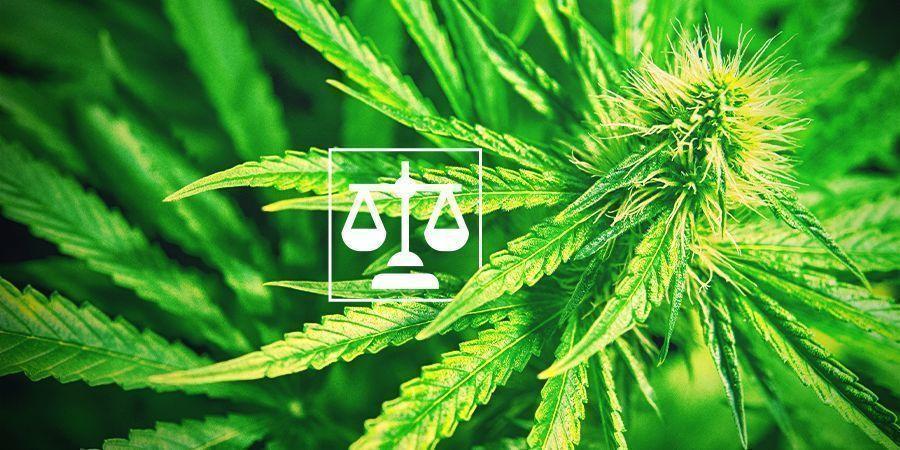 Legalidad Cannabis
