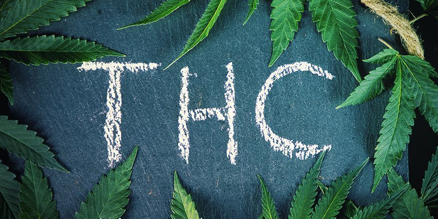 ¿Cuál Es La Diferencia Entre Cáñamo Y Cannabis?