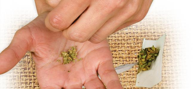 Picar Marihuana: Usa Tus Manos