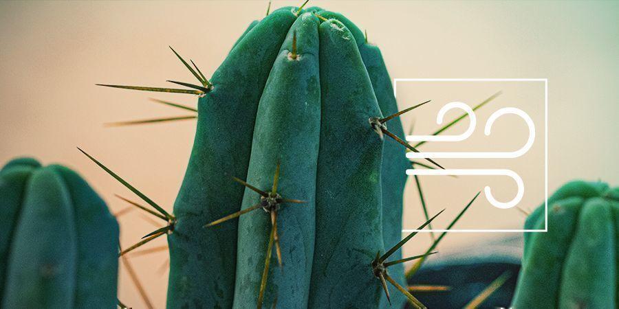 Antorcha Boliviana: El Cactus Psicoactivo De Los Cuatro Vientos