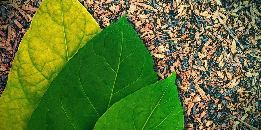 Sabor Y Cultura Del Tabaco