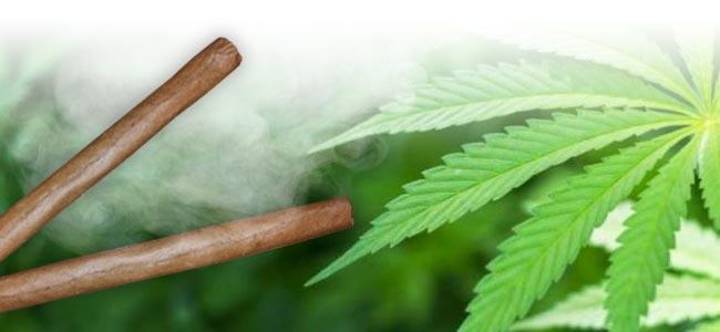 Fumar Marihuana Blunt