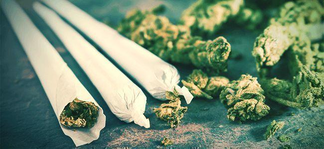 Fumar Marihuana Canuto