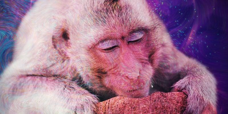 ¿Qué Es La Teoría Del Mono Colocado?