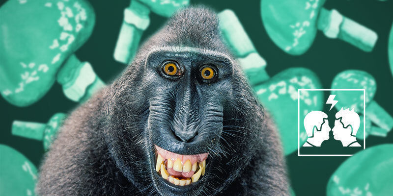¿Por Qué Es Controvertida La Teoría Del Mono Colocado?