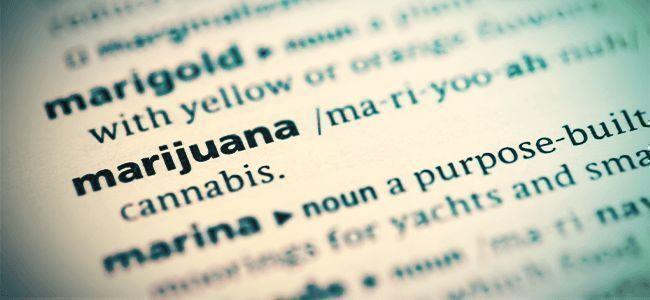 Libros Interesantes Sobre Cannabis