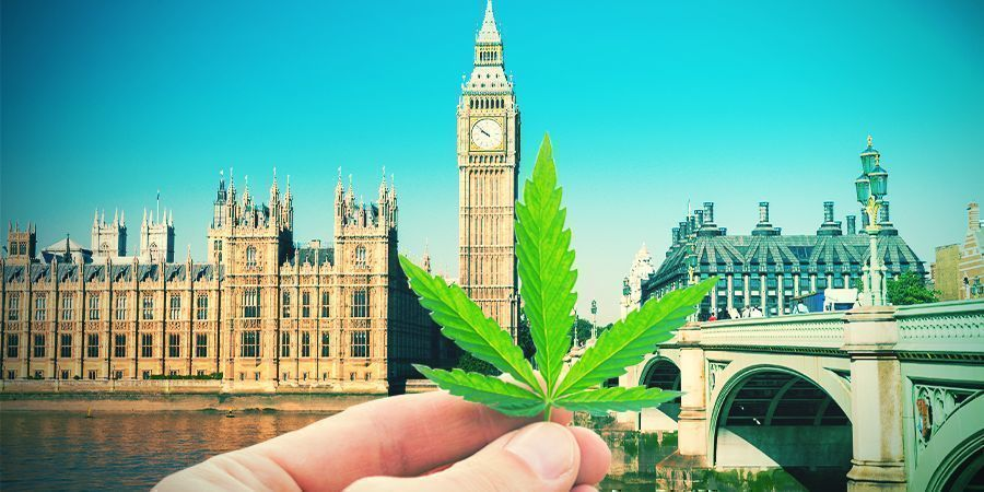 Cultivar Cannabis En El Clima Británico