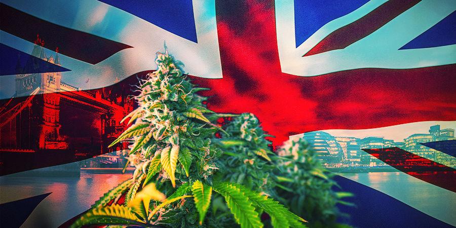 Cómo Elegir Las Variedades De Cannabis Correctas UK