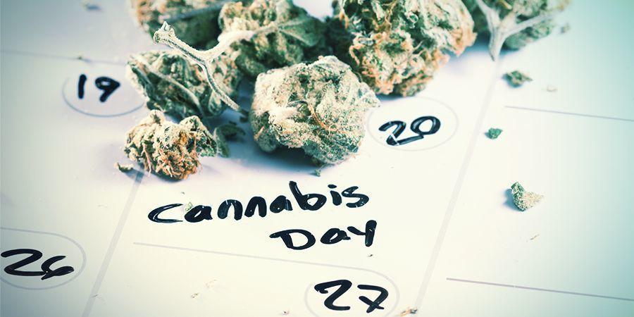 Cuándo Germinar Tus Semillas De Cannabis