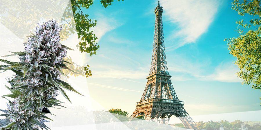 LA ZONA INTERMEDIA cannabis francia