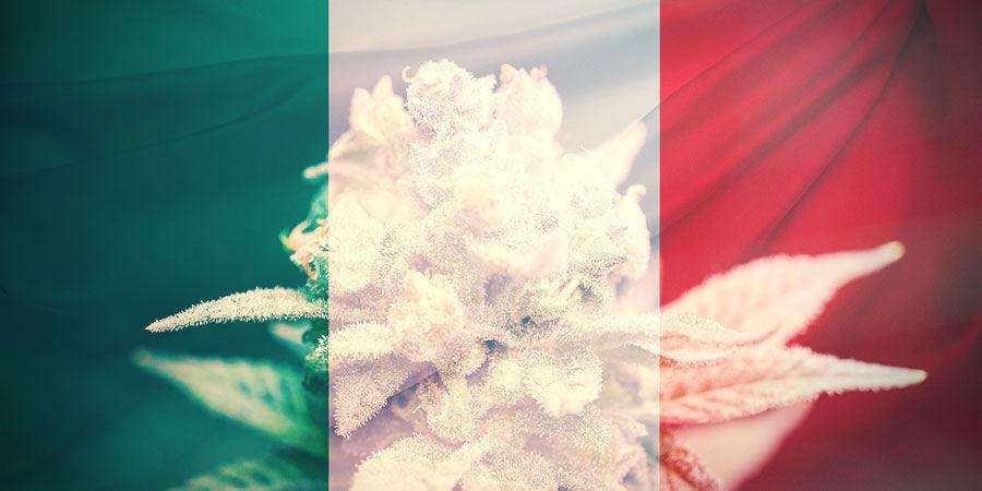 CÓMO ELEGIR LAS VARIEDADES DE CANNABIS ADECUADAS EN ITALIA