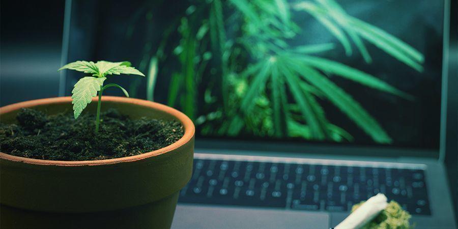 ¿Cuáles Son Las Mejores Páginas Web Para Fumetas?