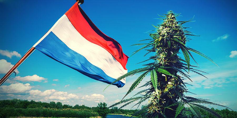 Cultivar Marihuana En El Clima Holandés