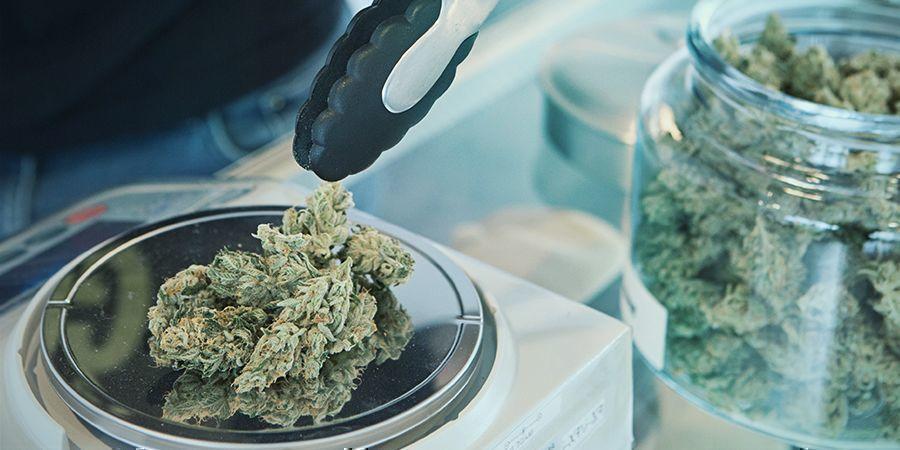 sistema uruguayo para la legalización del cannabis
