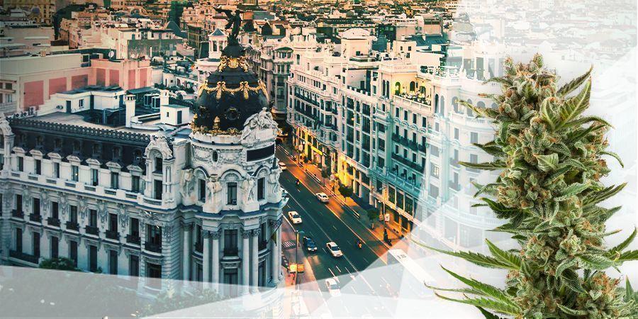 Cannabis Variedades Centro Y Mediterráneo De España