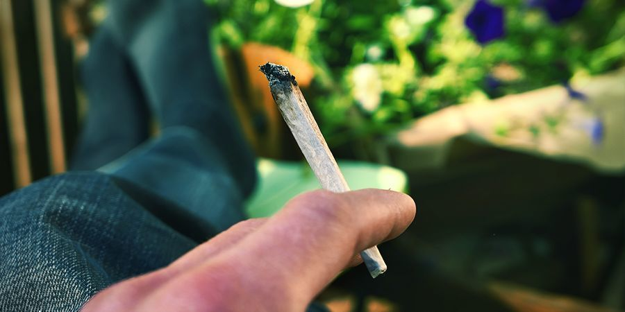 CIEGO/COCIDO Cannabis