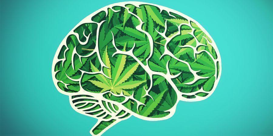 La Experiencia De Consumir Cannabis