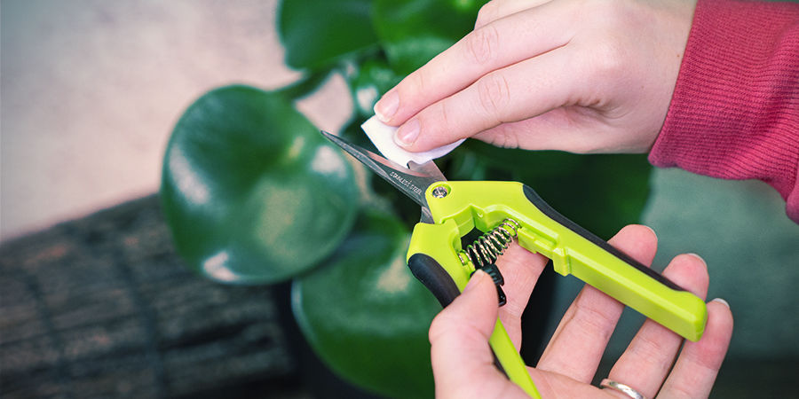 Consejos Para Usar Las Tijeras De Manicurar Cannabis: Engrasa Las Cuchillas