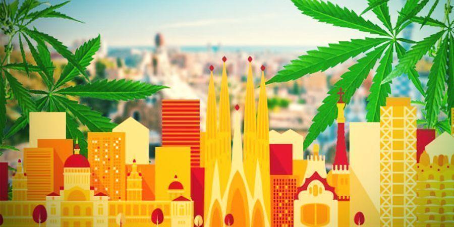 A La Caza Del Mejor Cannabis De La Zona