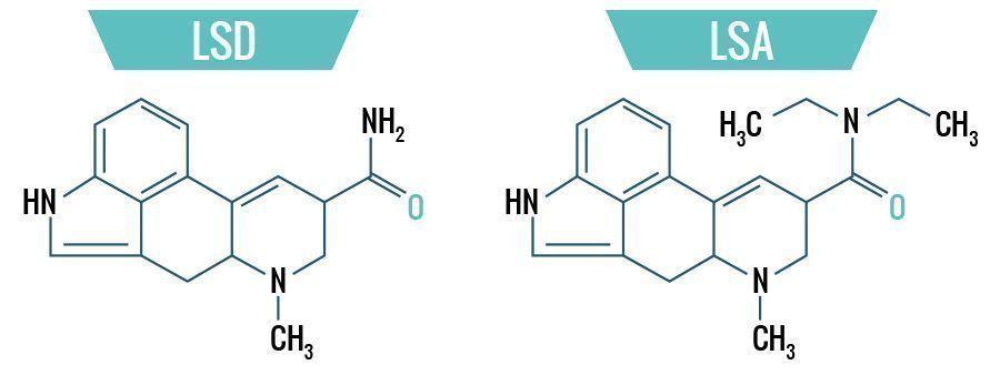 LSD vs. LSA - La Diferencia