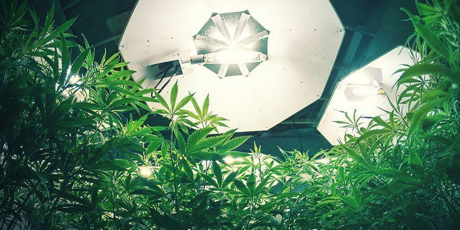 Marihuana Luces Y Ph De Las Raíces
