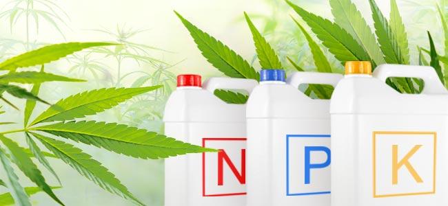 Cannabis Fertilizantes