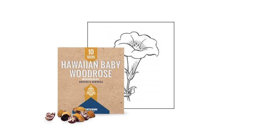 SEMILLAS DE HAWAIIAN BABY WOODROSE