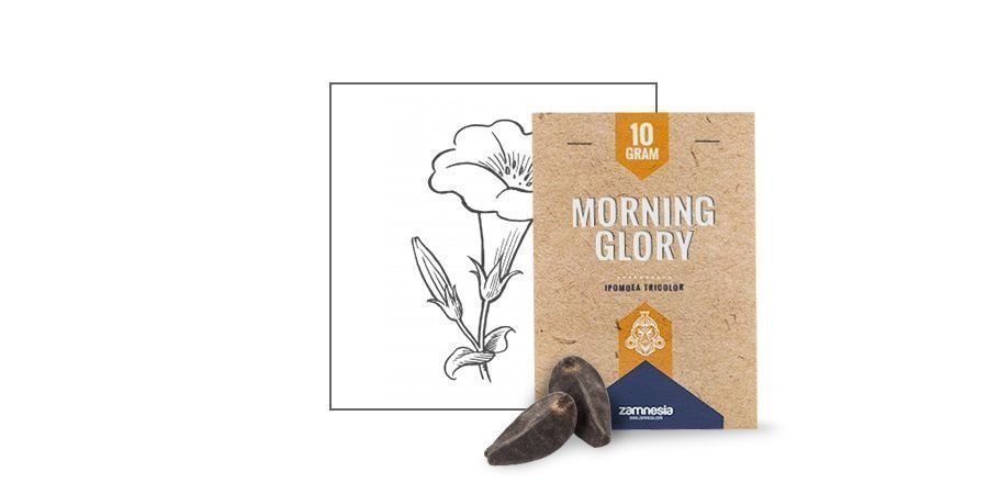 SEMILLAS DE MORNING GLORY