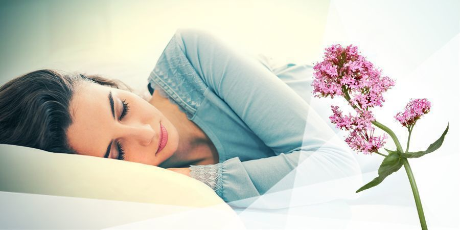 Valeriana Para La Relajación Y El Sueño