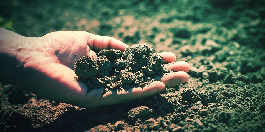 Clima Y Suelo Tabacco Seeds