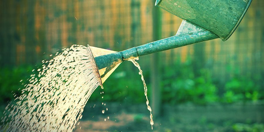 Proporcionar El Fertilizante Y El Agua Adecuados