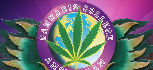 Premios Cannabis Culture Y El Cannabis College