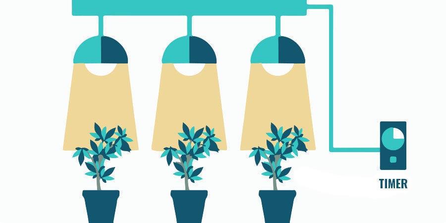 Problemas Durante La Floración Del Cannabis: Optimiza La Iluminación