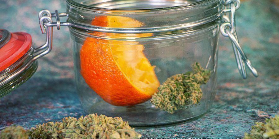 Rehidratan Los Cogollos De Marihuana: Cáscaras De Naranja