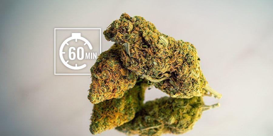 Rehidratan Los Cogollos De Marihuana: A Corto Plazo (Horas)