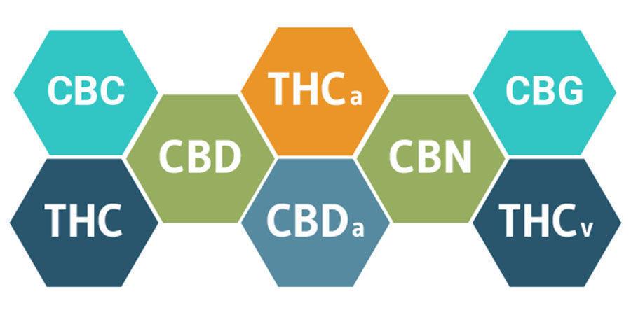 El Efecto Séquito Y Los Cannabinoides