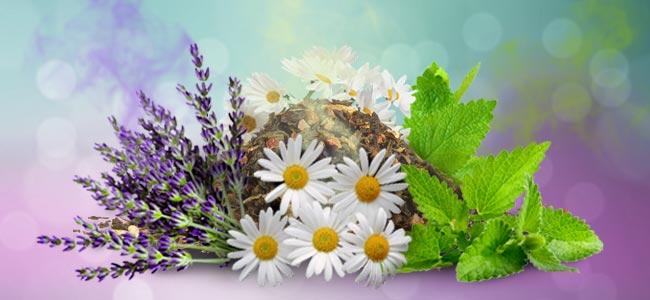 Qu hacer con las plantas de cultivos asociados tras la for Que son cultivos asociados