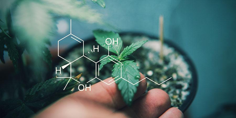 Descubre Los Cannabinoides